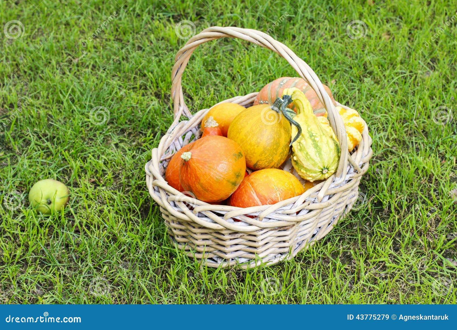 Basket of pumpkins in the garden