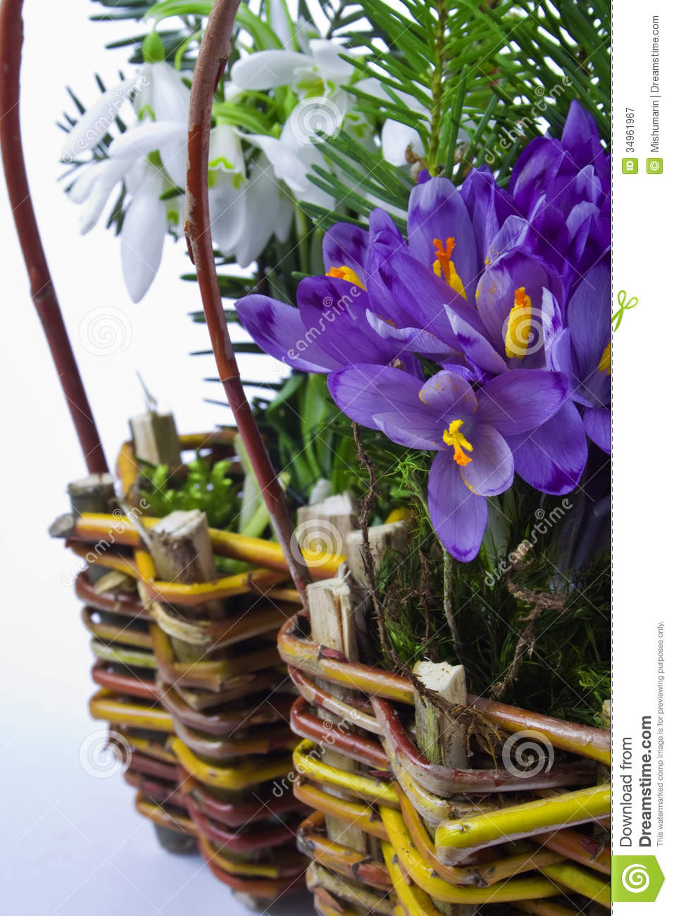 Basket Of Snowdrops And Crocuses Stock Image Image 34961967