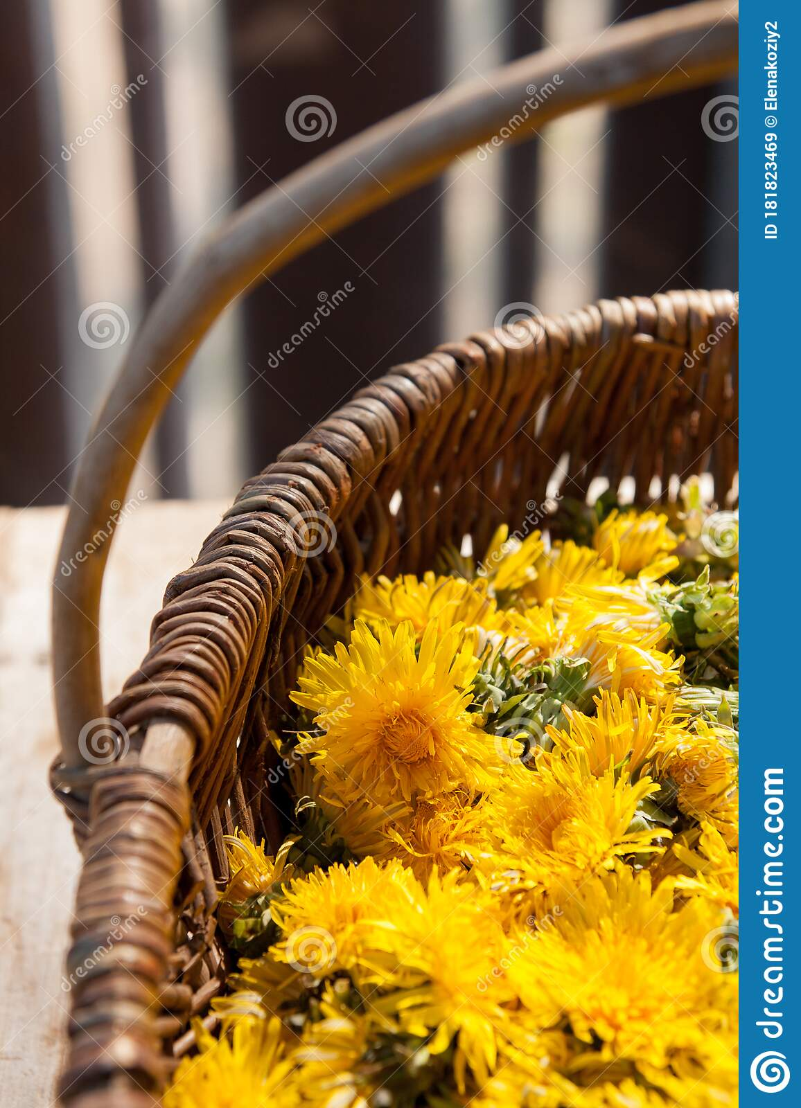 Braided Natural Basket With Yellow Dandelion Flowers Stock Image Image Of Green Collect 181823469