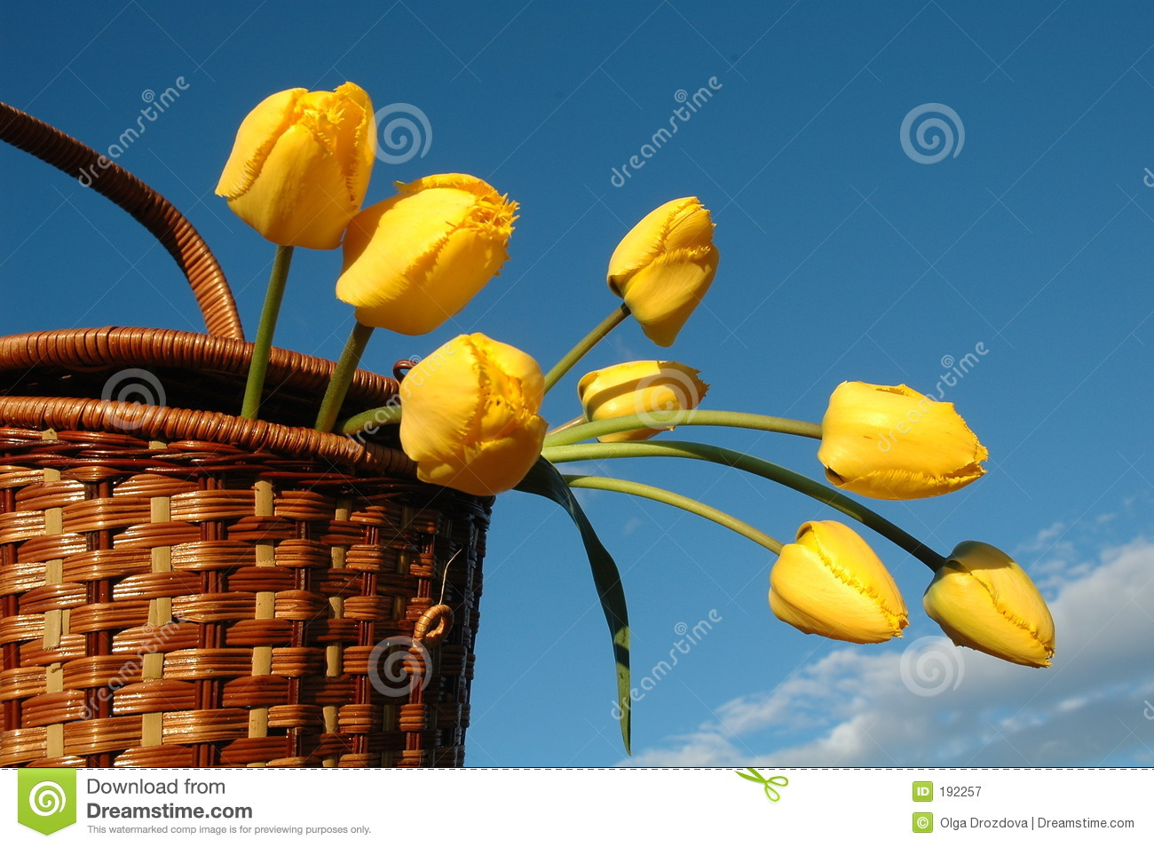 The basket with yellow tulips.