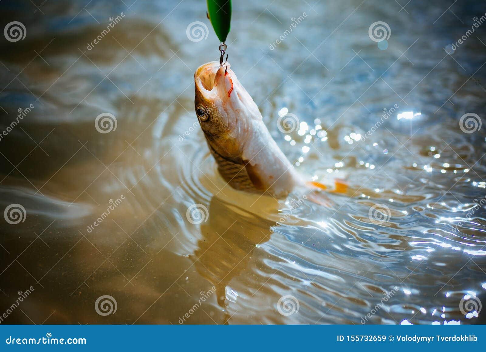 Bass fishing splash. Catching a big fish with a fishing pole. Lure fishing.