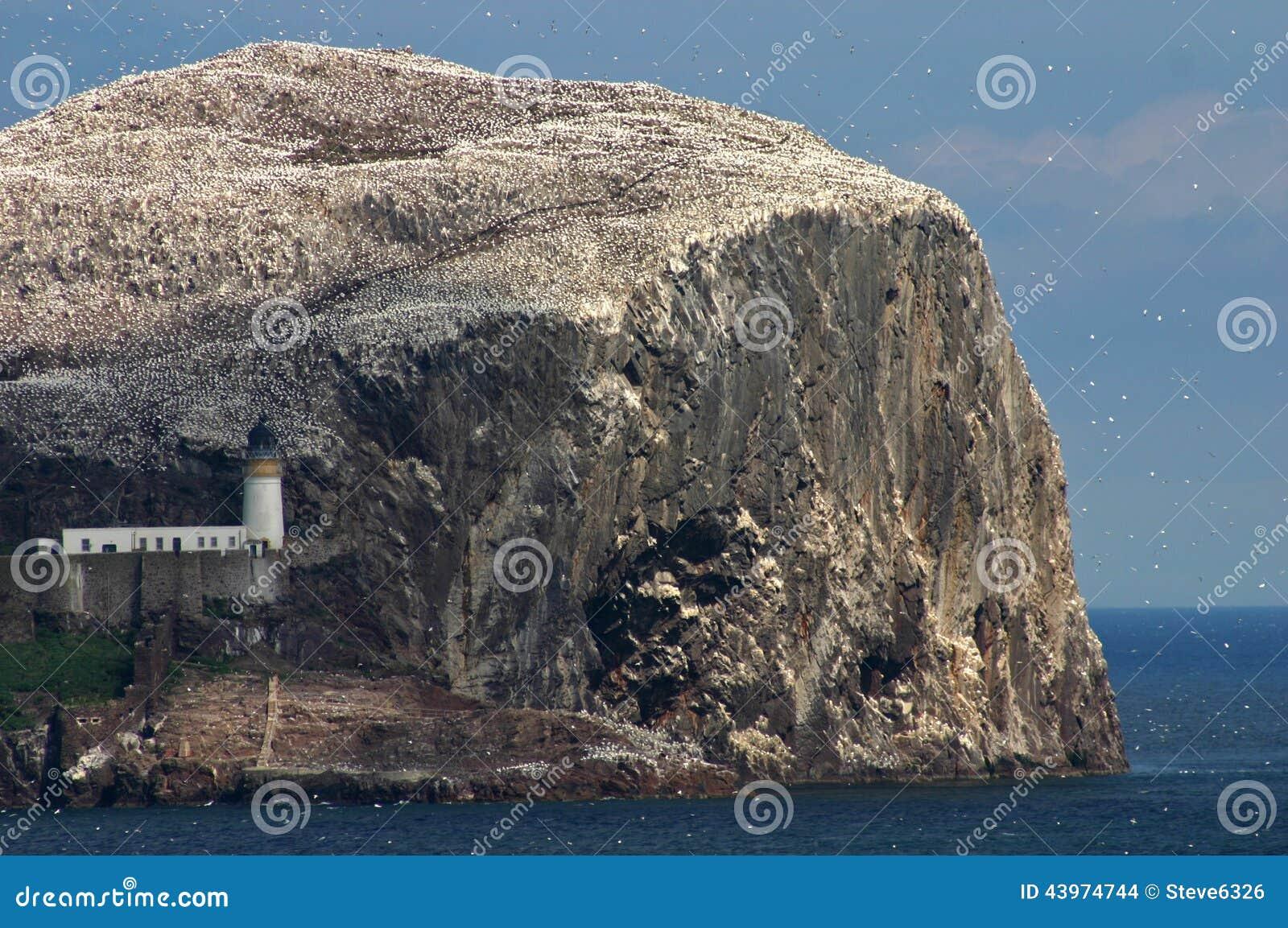 Bass Rock Skottland
