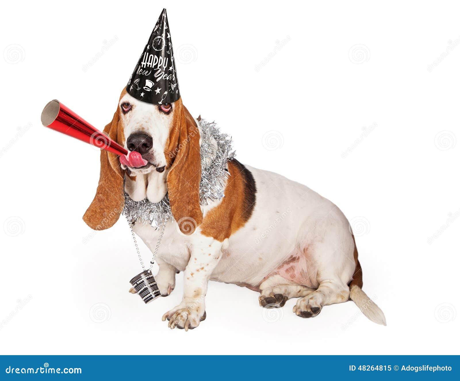 Basset Hound New Years Party Dog Stock Image Image Of Length Indoors 48264815