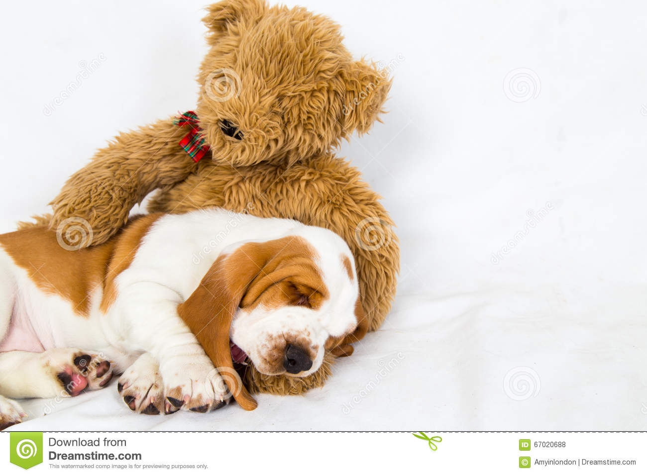 Puppy Sleeping On Teddy Bear Royalty-Free Stock Image ...