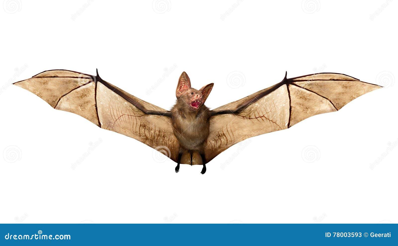 Bastão de vampiro do voo isolado no fundo branco