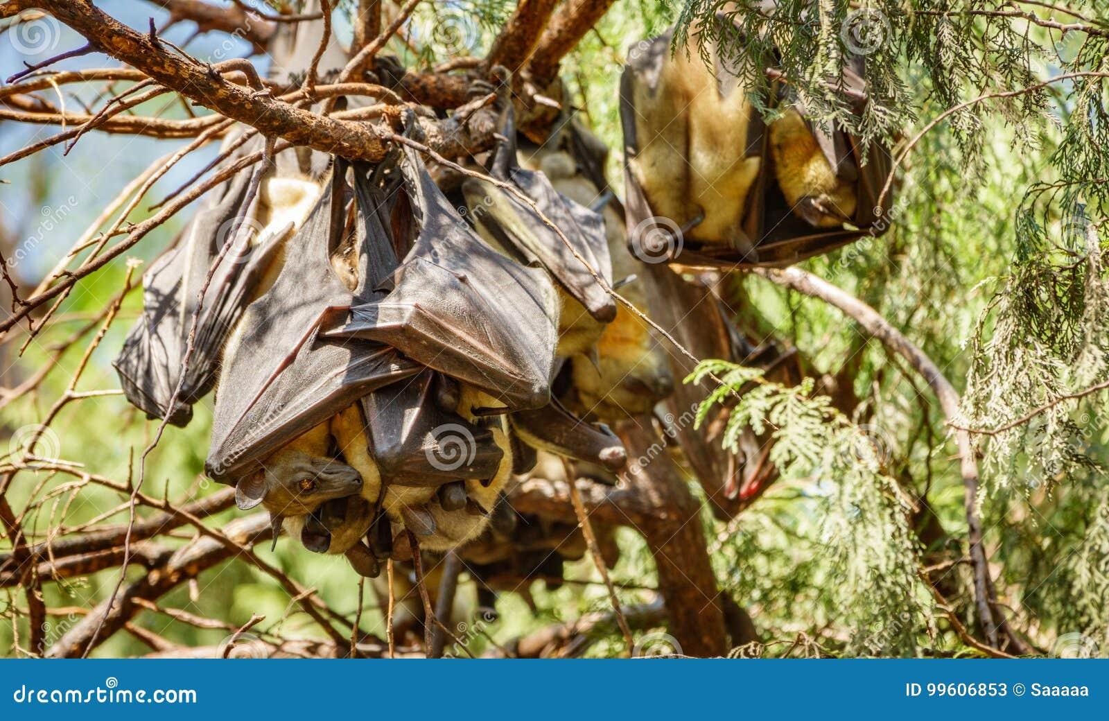 Bastão que pendura no ramo de árvore