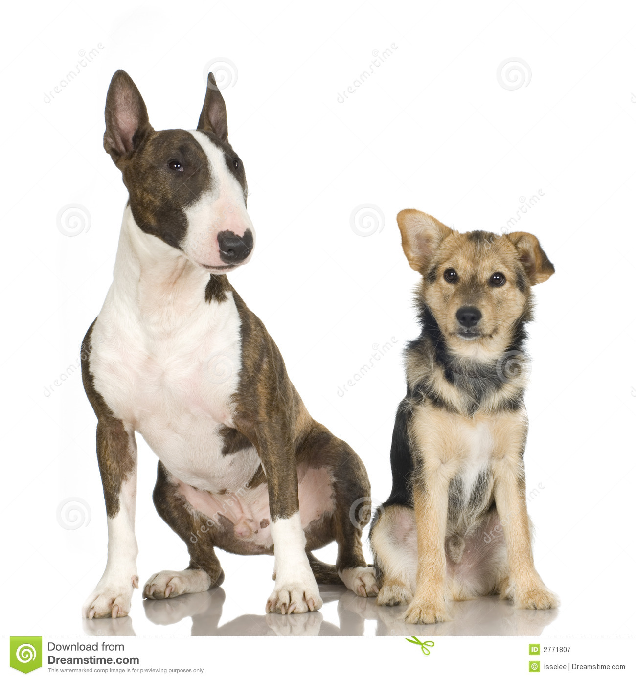 Bastard And A Bull Terrier Royalty Free Stock Photography