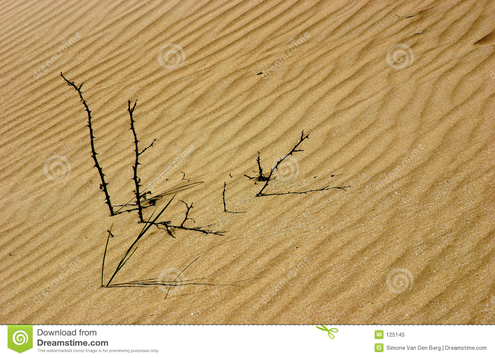 Bastoni nelle dune