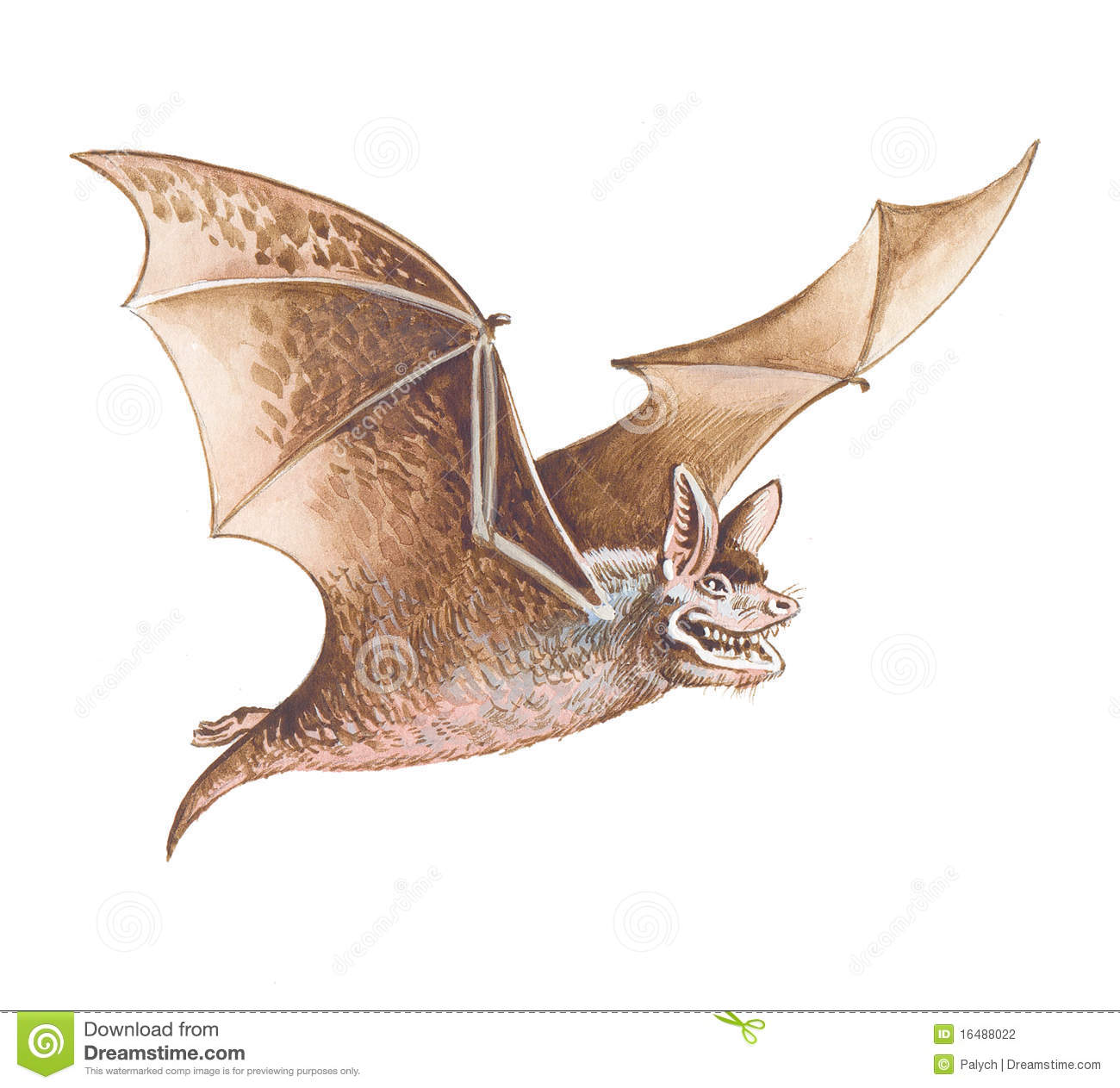 how to get rid of bat wings