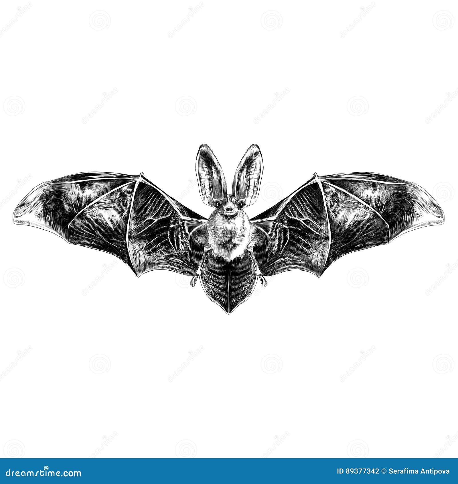 bat sketch graphics stock illustration illustration of fear 89377342