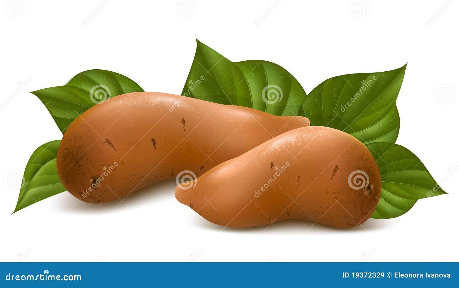Batata doce com folhas.
