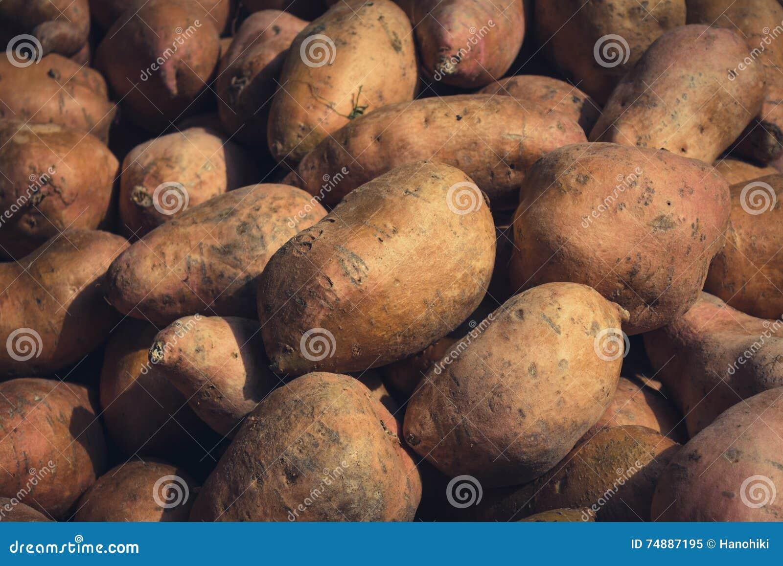 Batata doce - fundo cru das batatas doces -