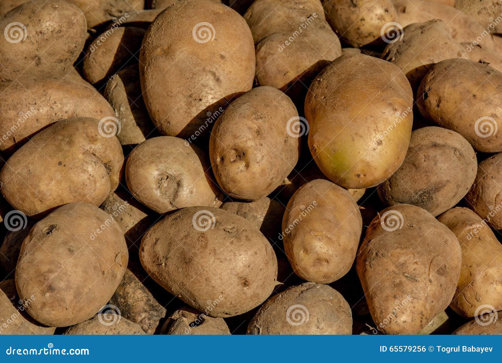 Batatas sob a luz solar