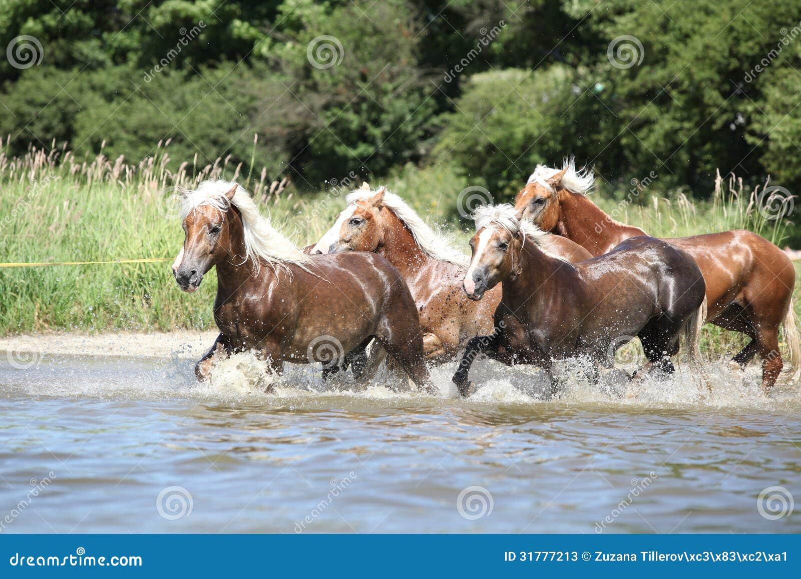 bdo how to catch a wild horse