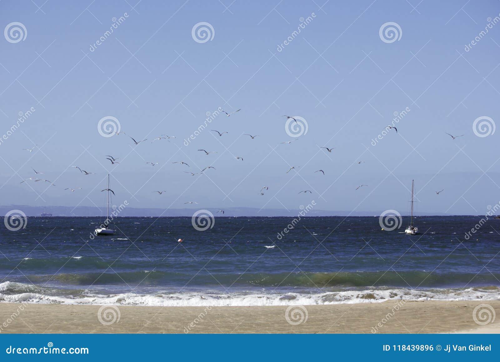 Bateaux à voile à l ancre près de la plage avec la scène d oiseaux en vol