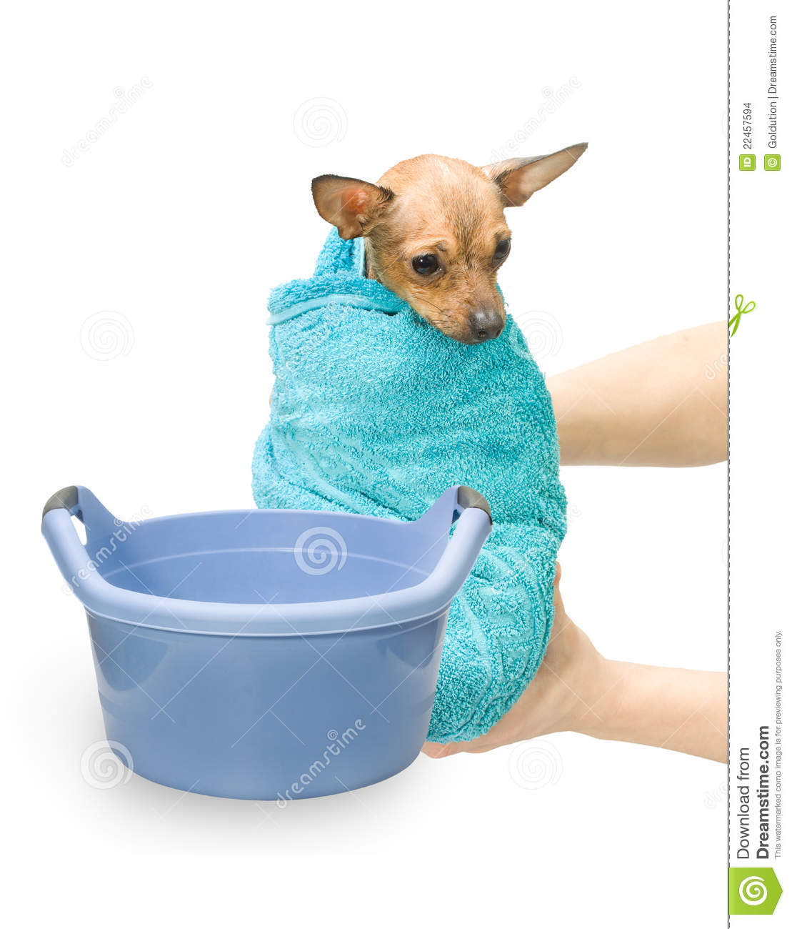 Bath Canine Hydrotherapy Stock Images Image 22457594
