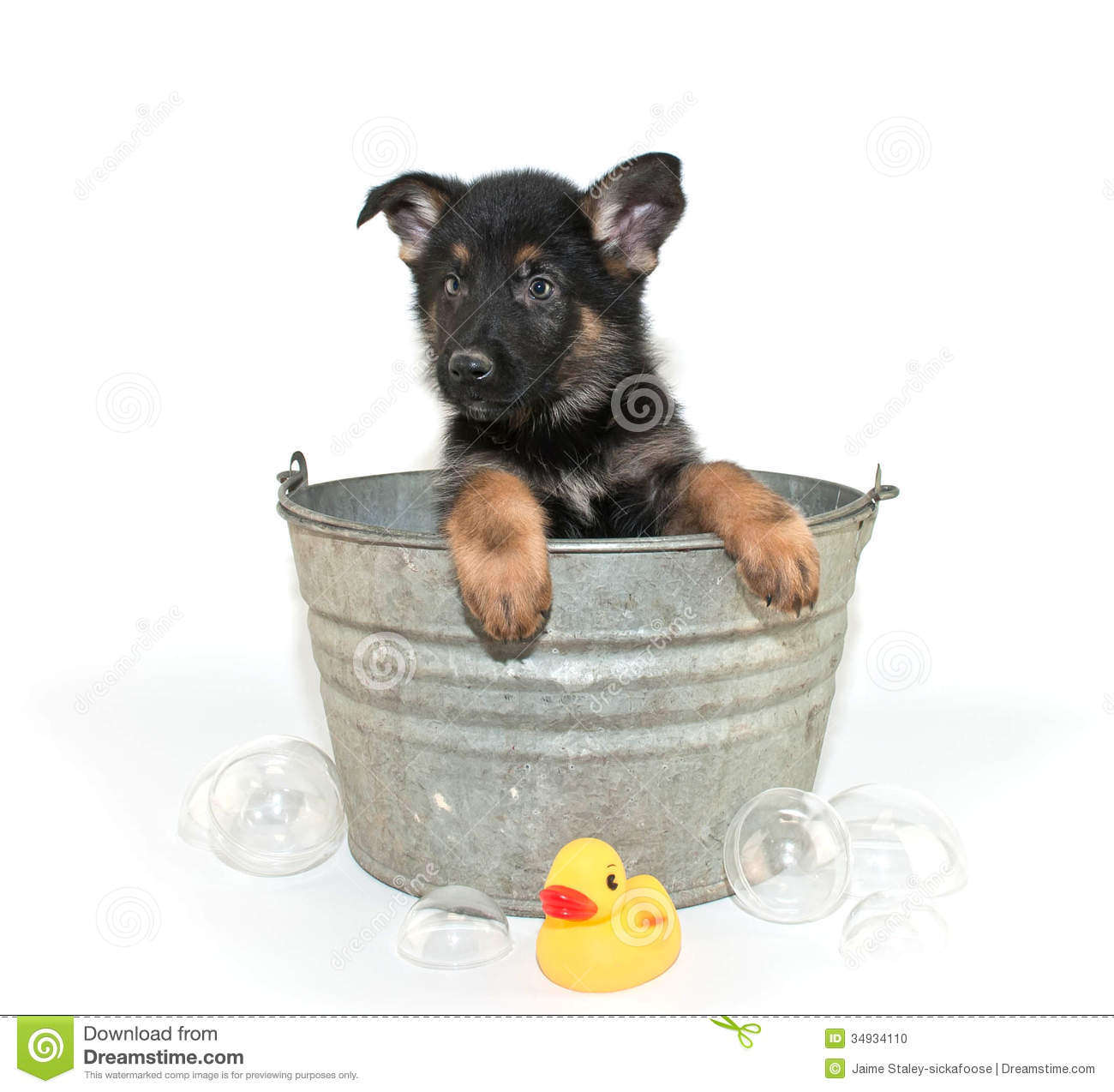 Bath Time Stock Photo Image Of White Domestic Brown