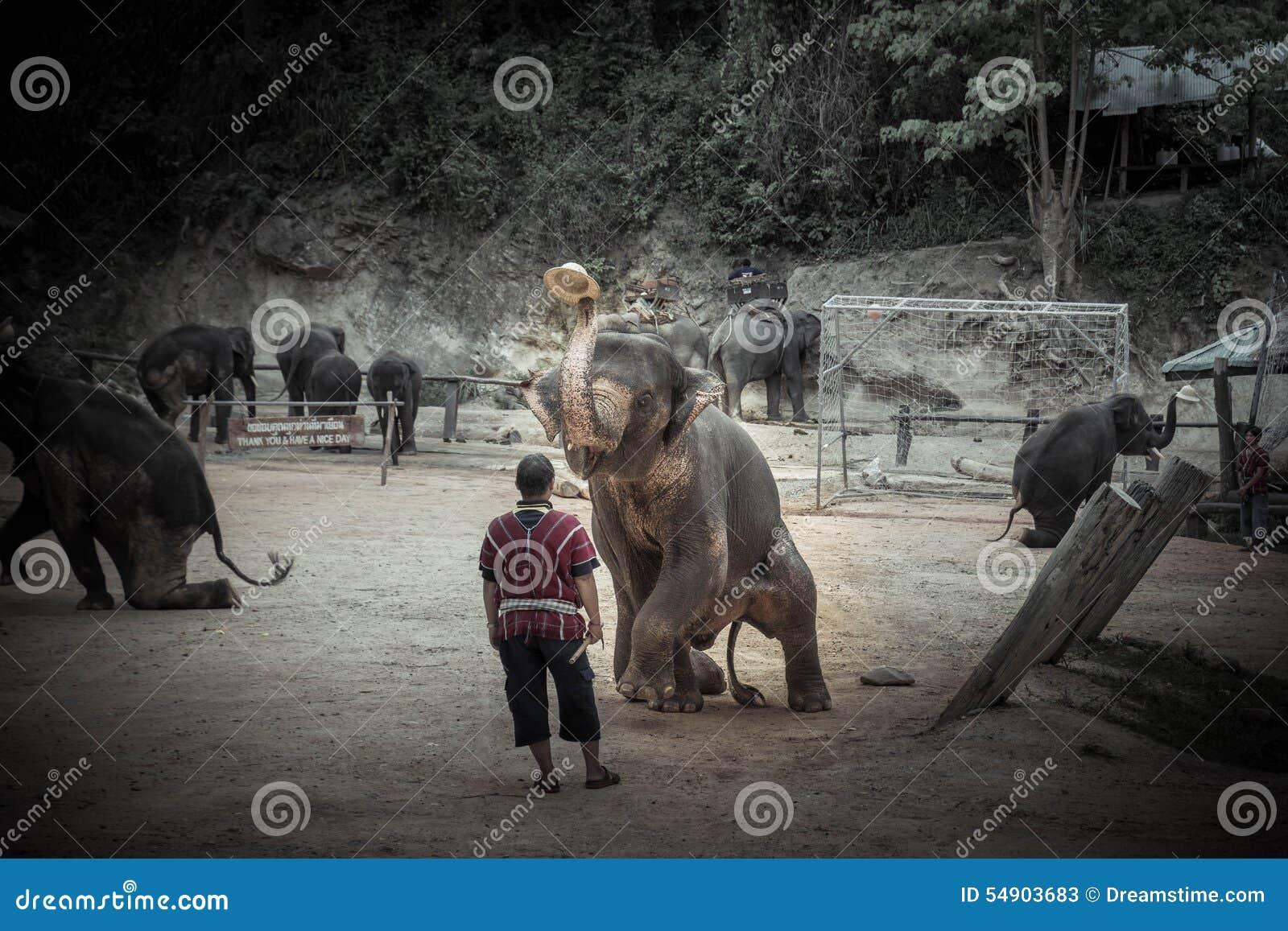 Bathing elephants at Mae Sa Elephant Camp, Mae Rim, Chiang Mai.