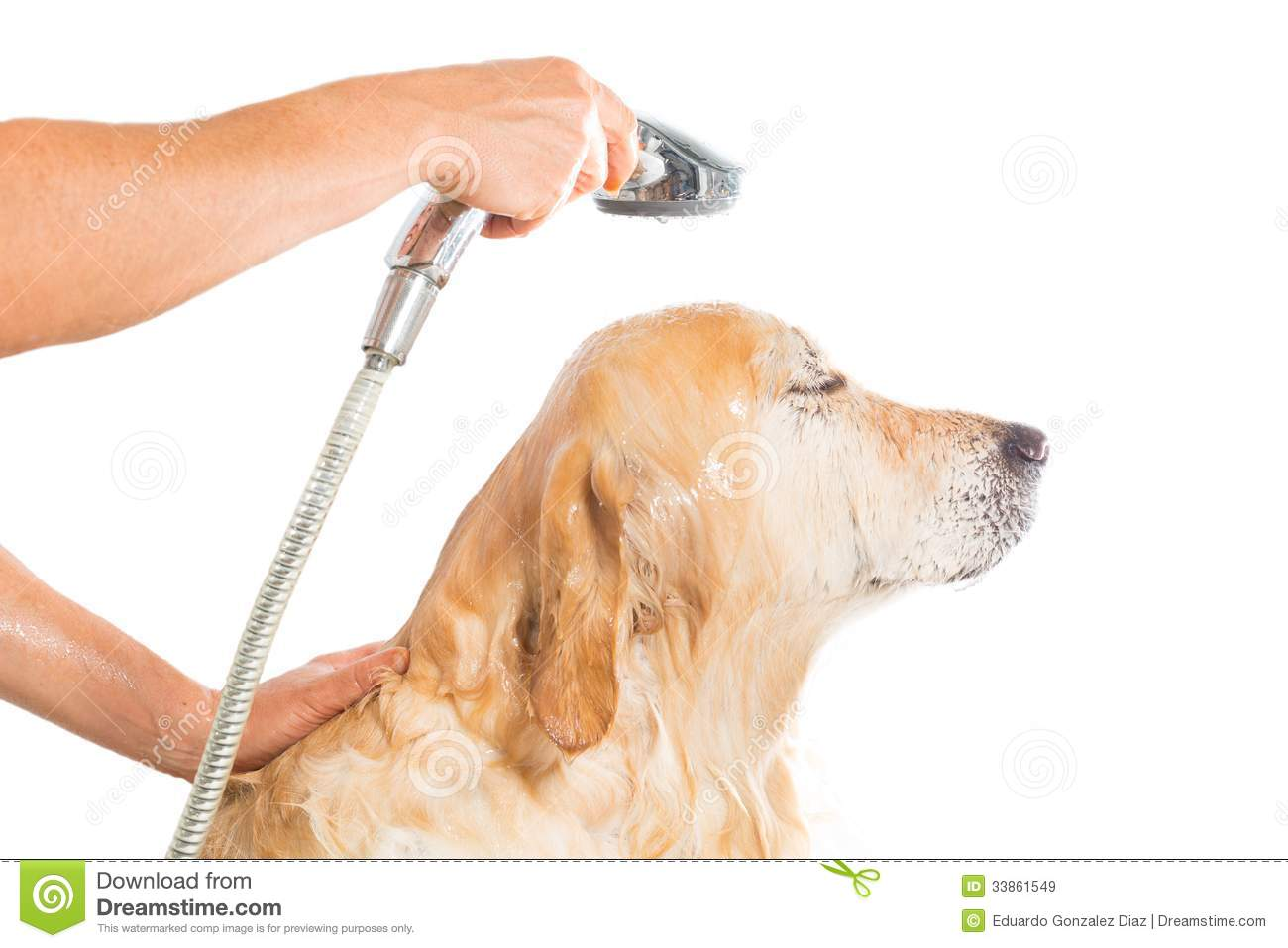 Bathroom To A Dog Royalty Free Stock Images - Image: 33861549