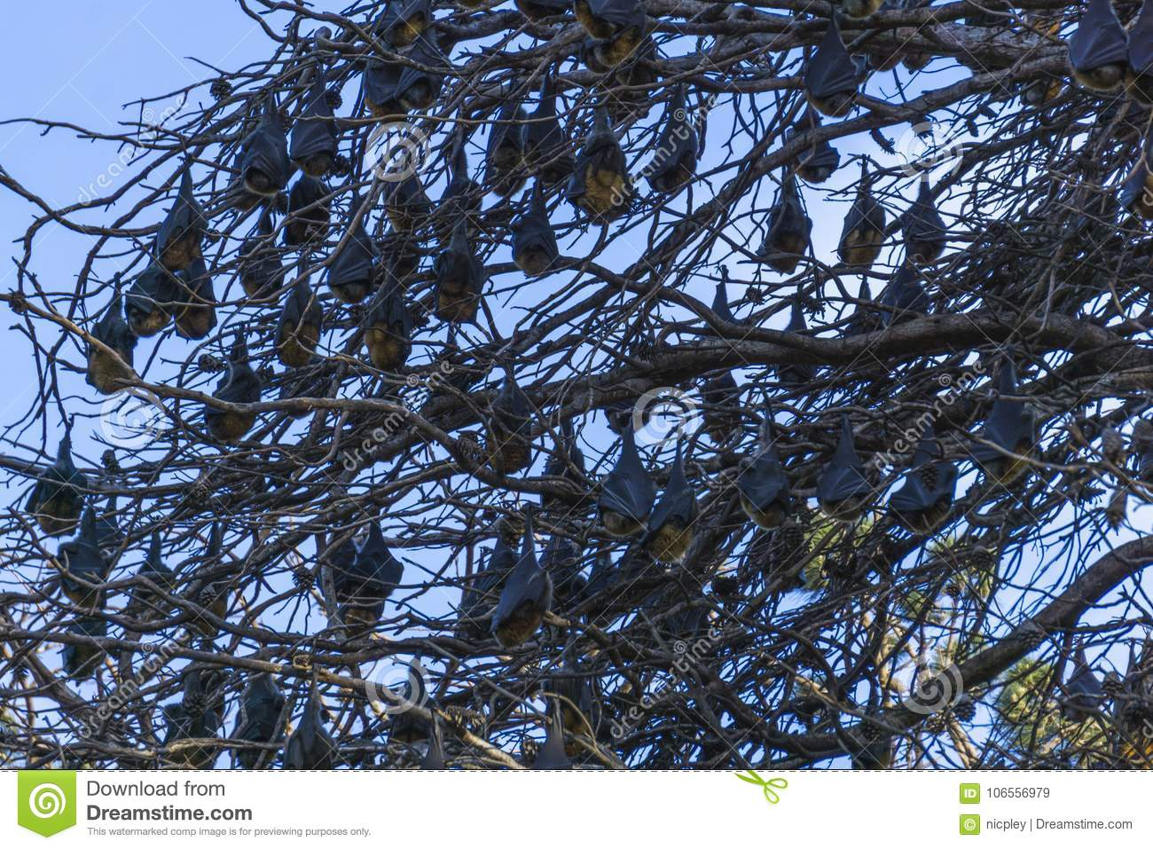 Bats just hanging out in tree