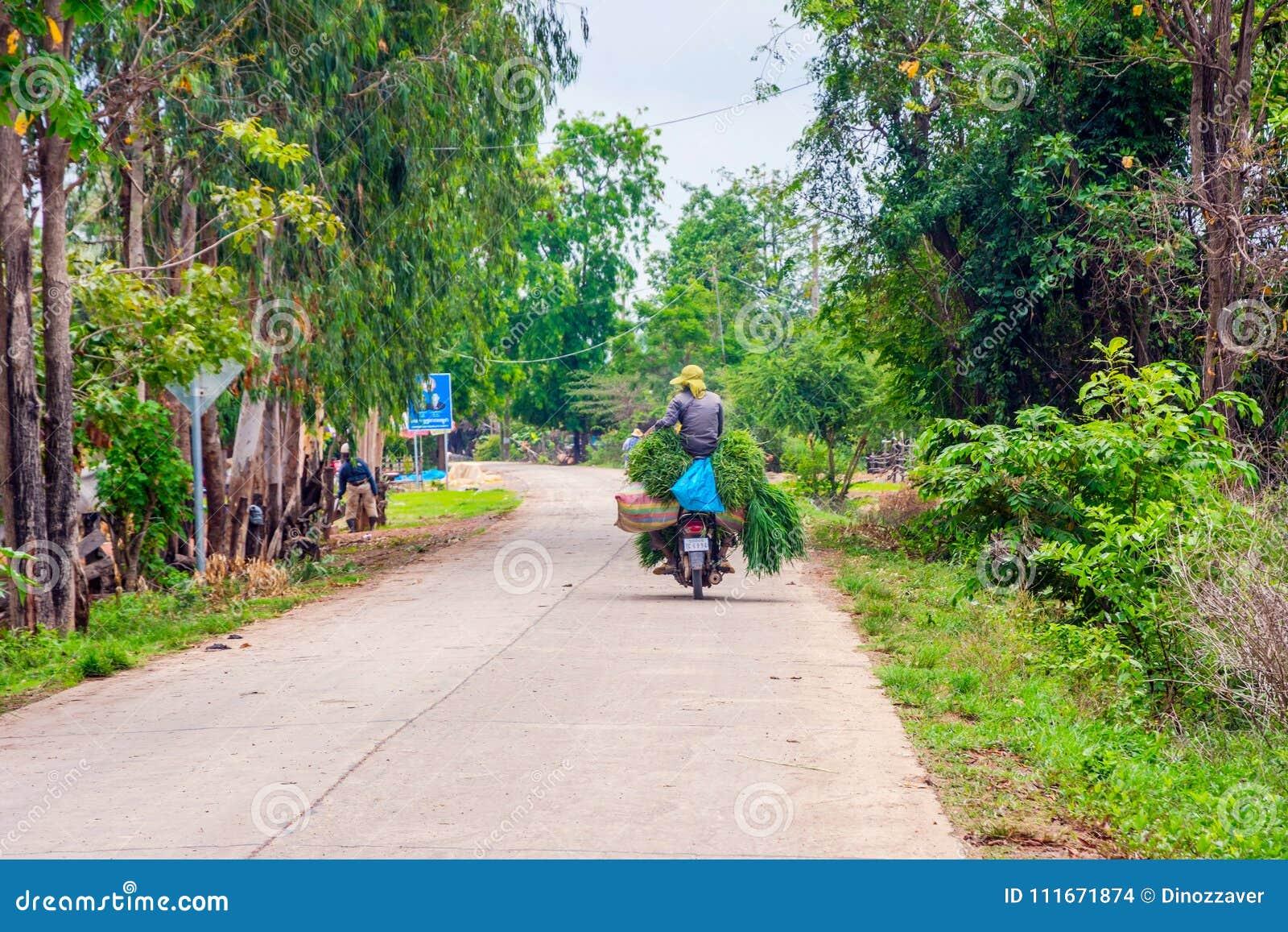 Motorbike Transferring Fresh Rice, Cambodia Editorial Stock Image