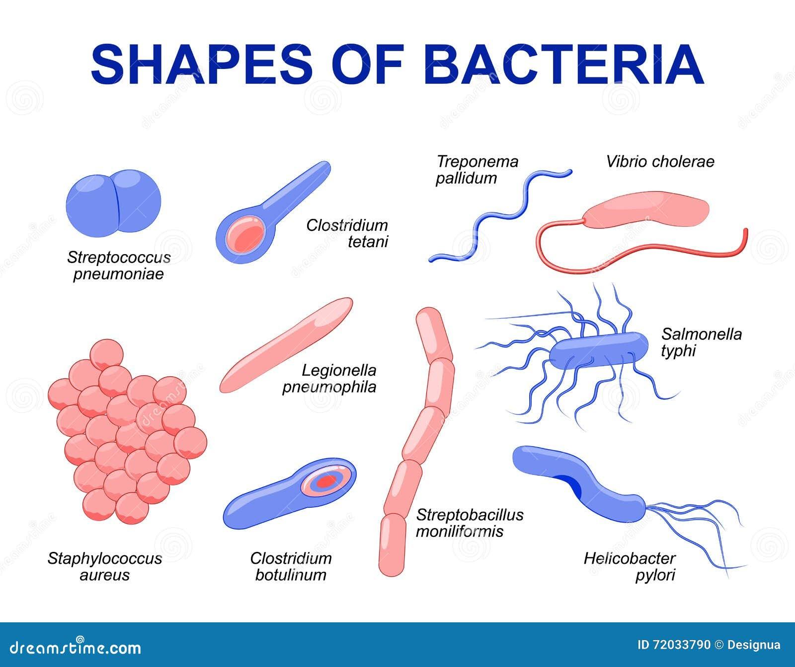 Batteri comuni che infettano essere umano