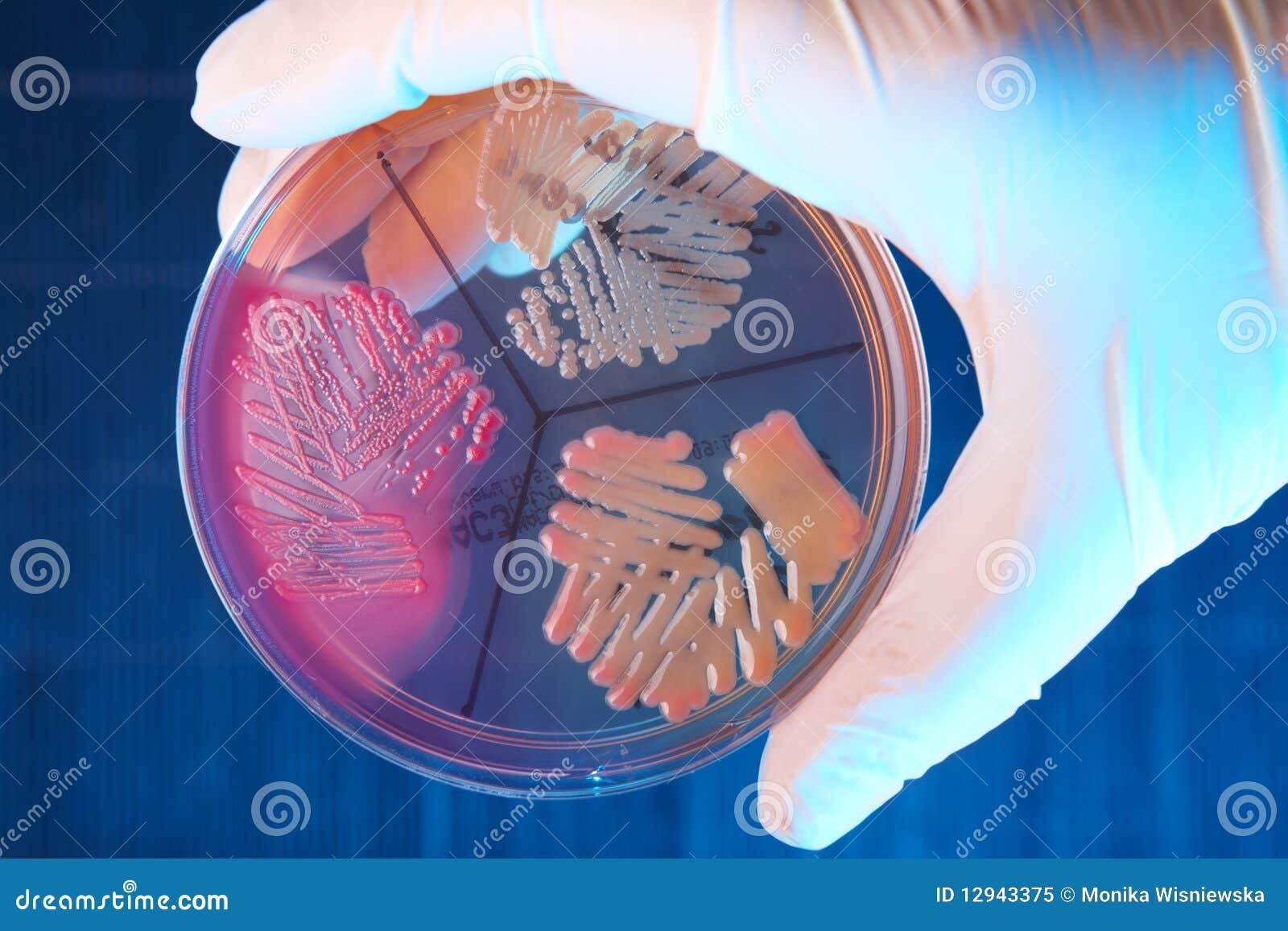 Batteri patologici
