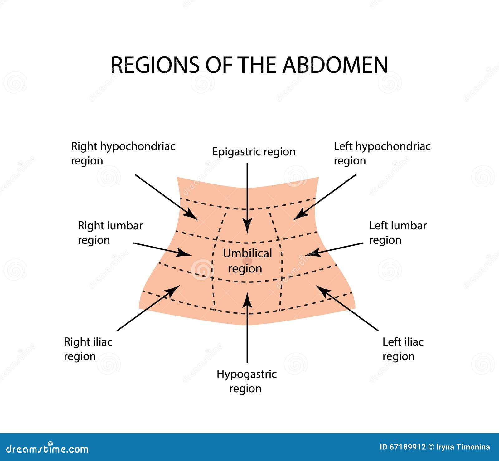 Berühmt Bauchbereich Bilder - Anatomie Und Physiologie Knochen ...