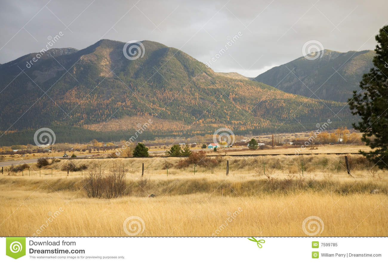 Bauernhof-färbt Gelber Espen-Hügel-Fall Montana Stockbild - Bild von ...