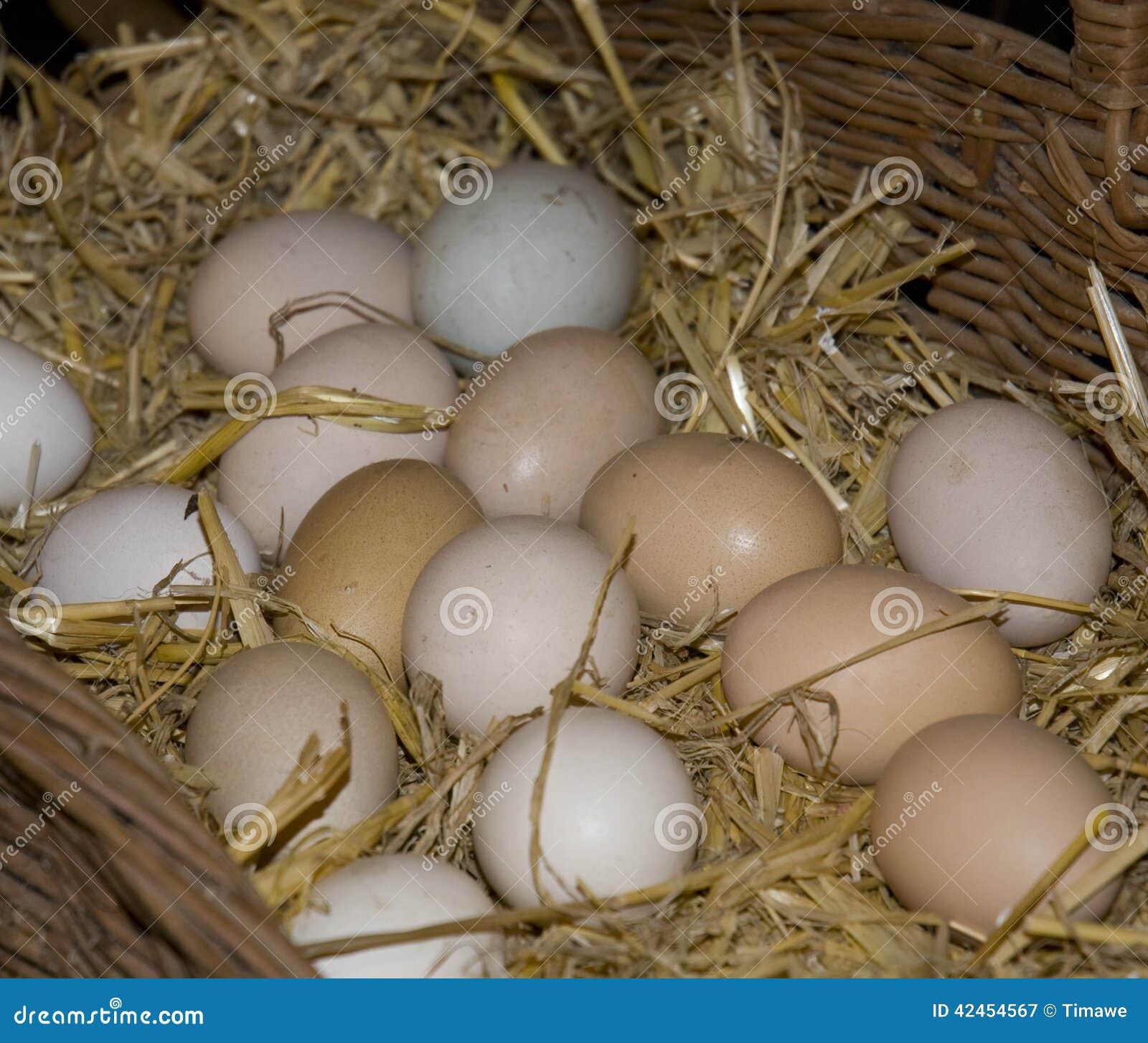 Bauernhof-frische Eier