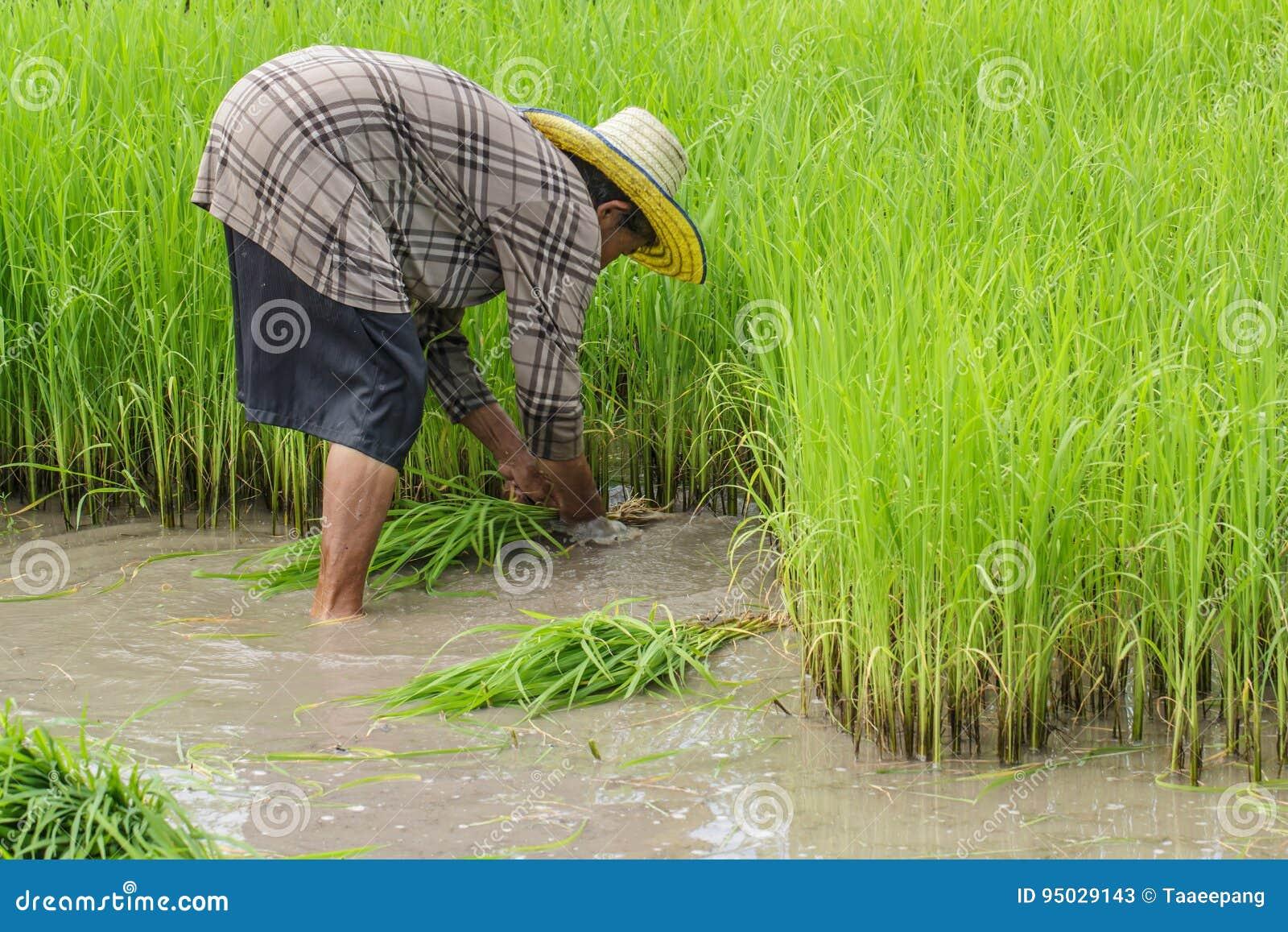Bauernschaft, Landwirte