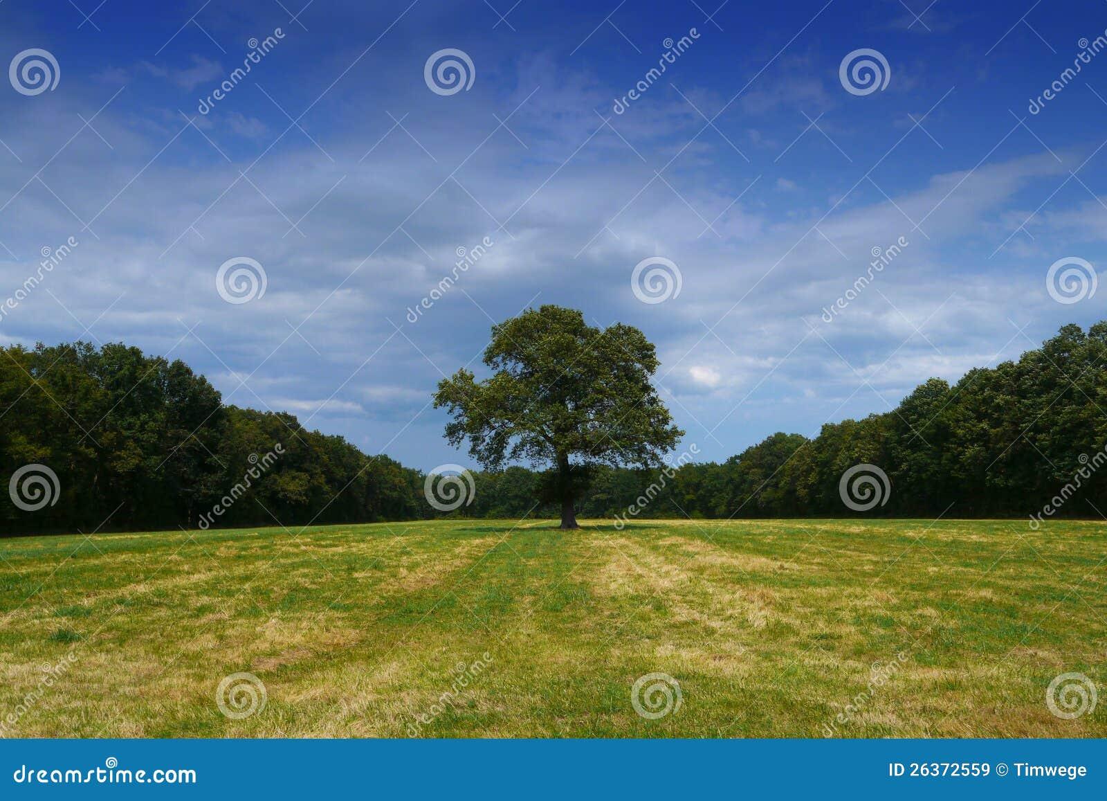 Baum alleine auf dem Gebiet