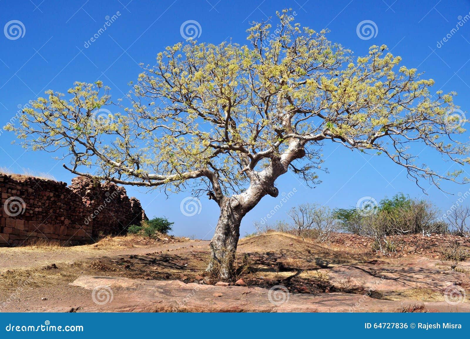 Baum aus Felsen heraus