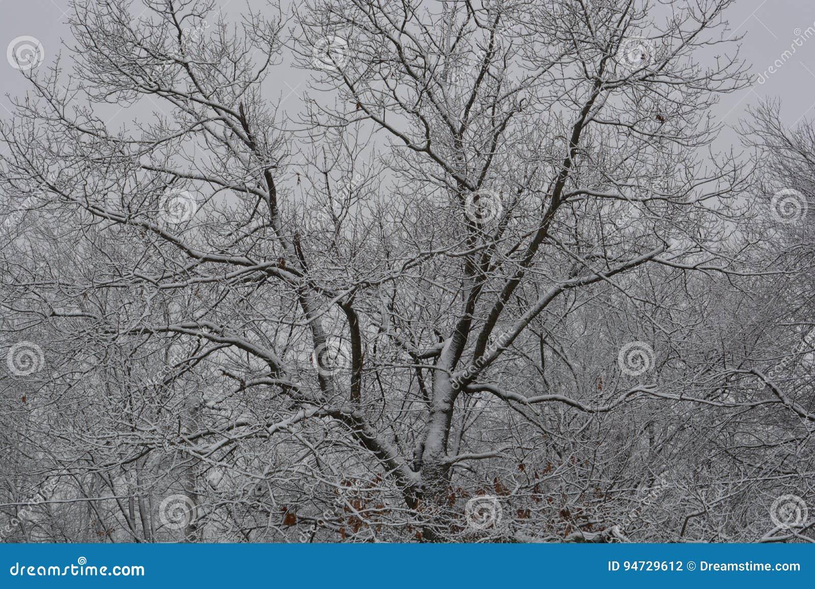 Baum bedeckt im Winter