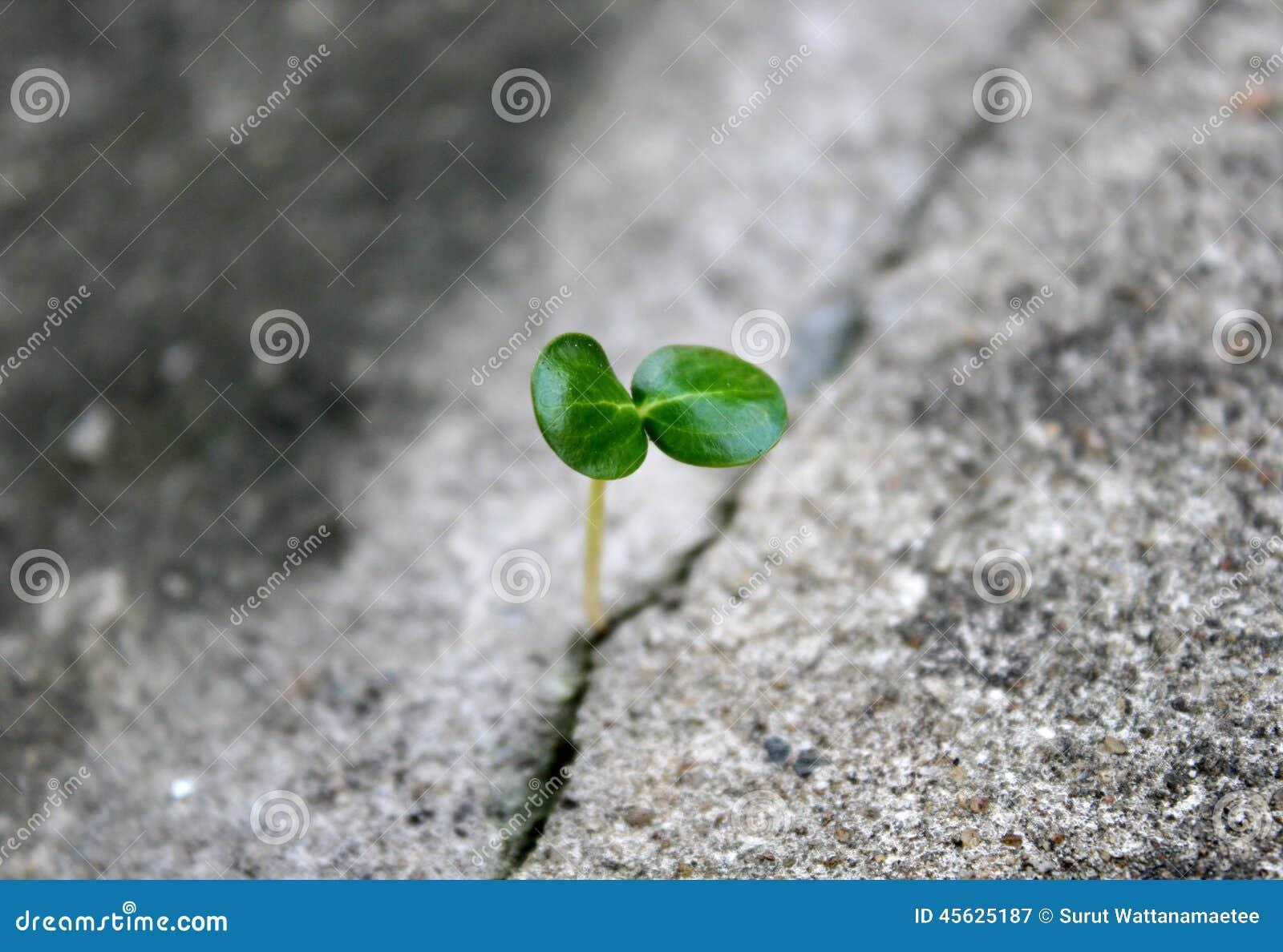 Baum, der durch konkreten Sprung wächst