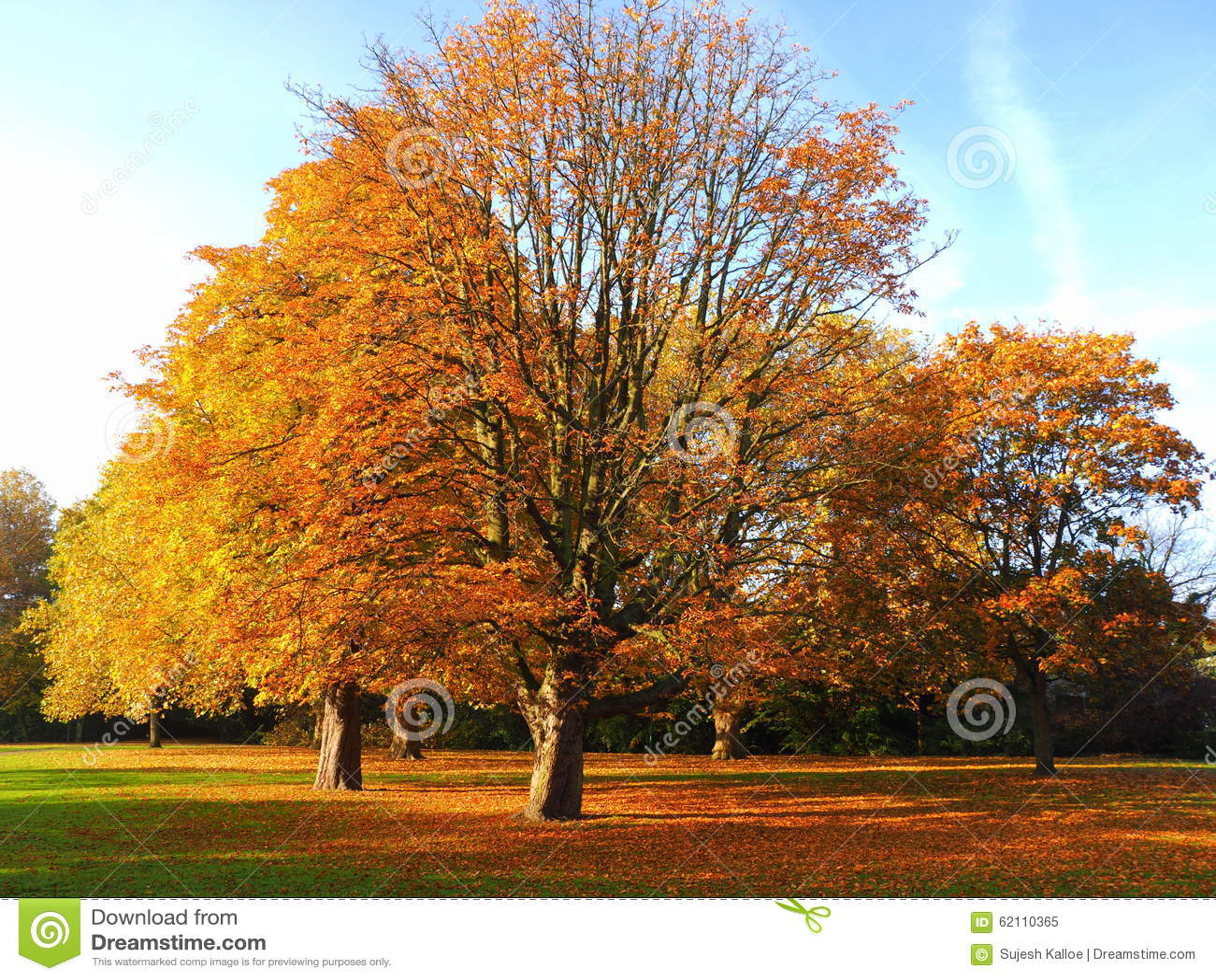 Baum Der Seine Blatter Verliert Stockbild Bild Von Sein Baum