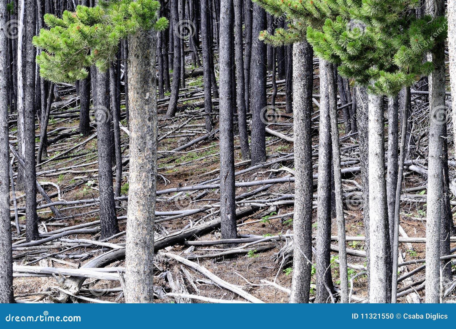 Baum des Waldes