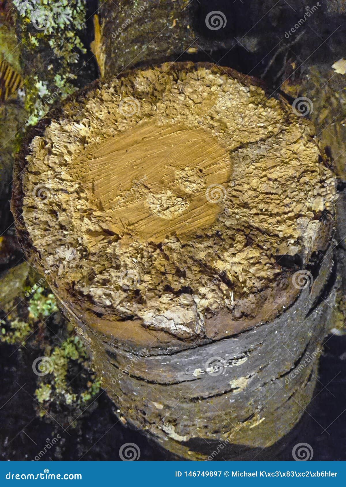 Baum- des Waldesstück der hölzernen Schnitzel hölzernes mit toten Zonen draußen