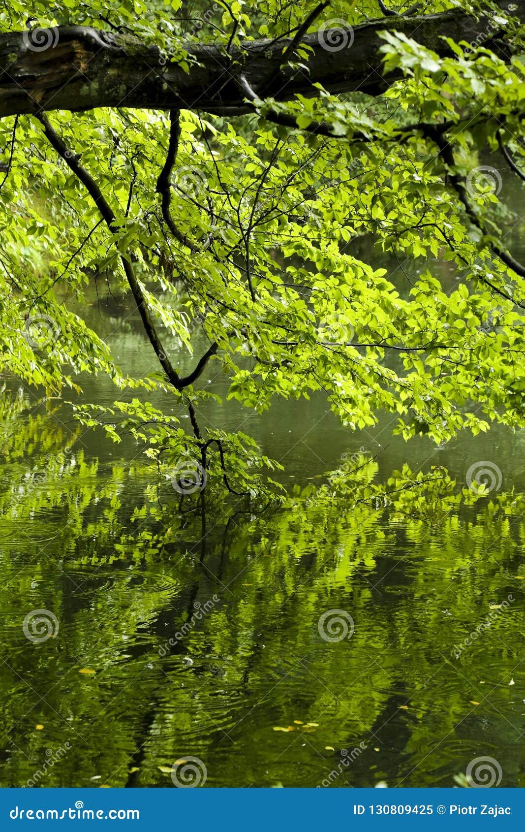 Baum im Park reflektiert im Teich
