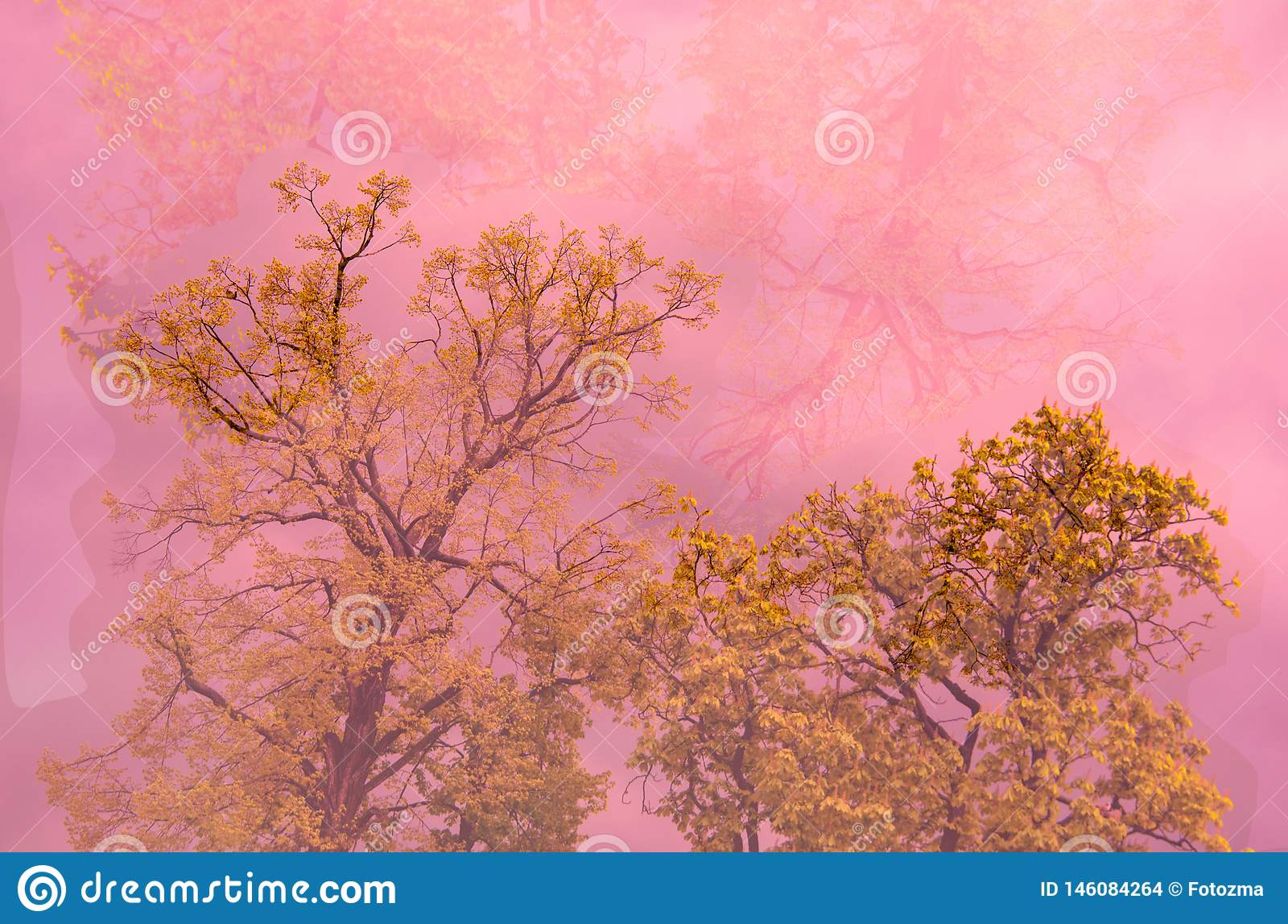 Baum im rosa Nebel