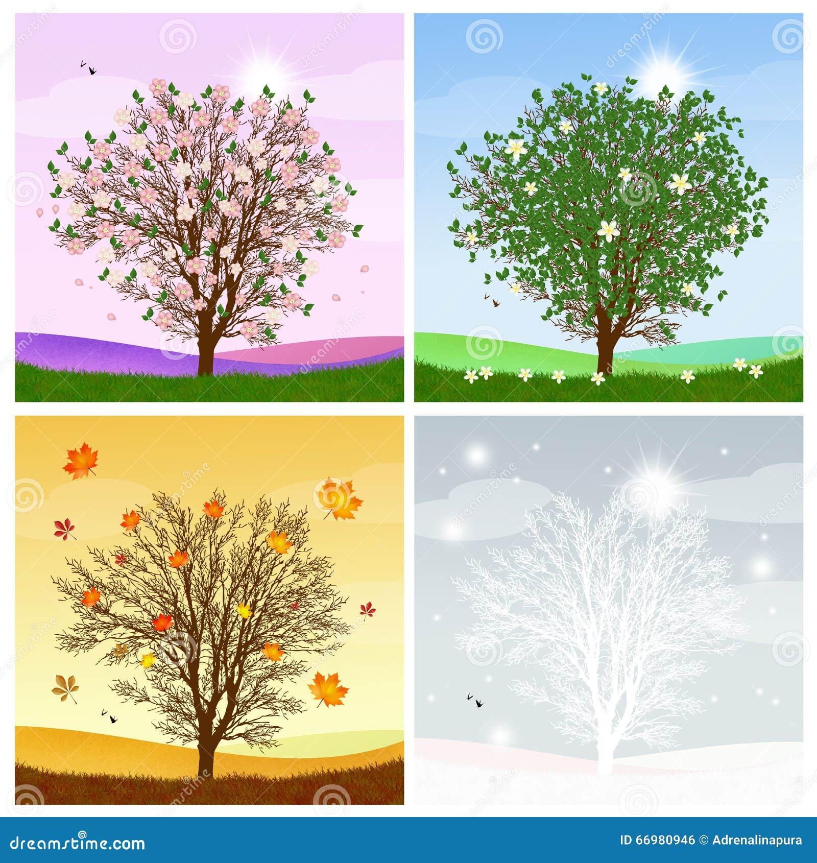 baum im vierjahreszeiten stock abbildung illustration von collage 66980946. Black Bedroom Furniture Sets. Home Design Ideas