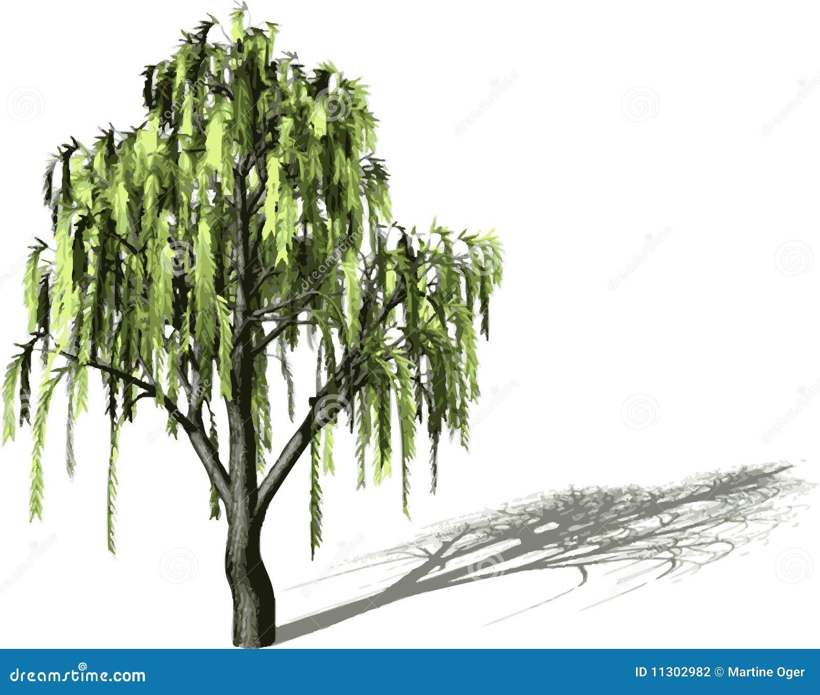 Baum mit Schatten.