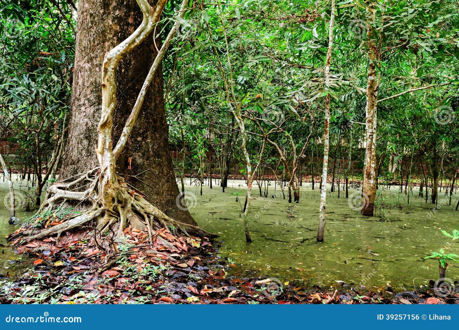baum mit wurzeln im regenwald dschungel stockfoto bild von barke bl tter 39257156. Black Bedroom Furniture Sets. Home Design Ideas