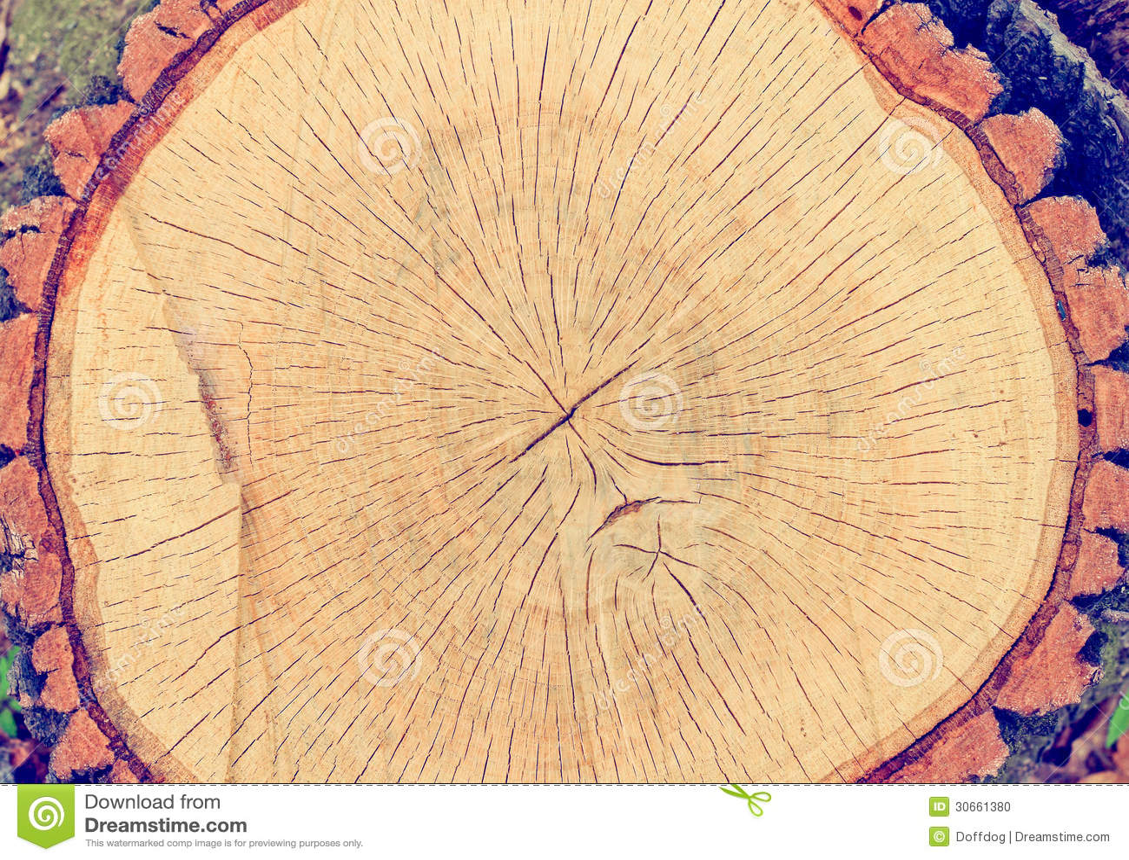 Baum-Querschnitt stockfoto. Bild von muster, kurve, feld - 30661380