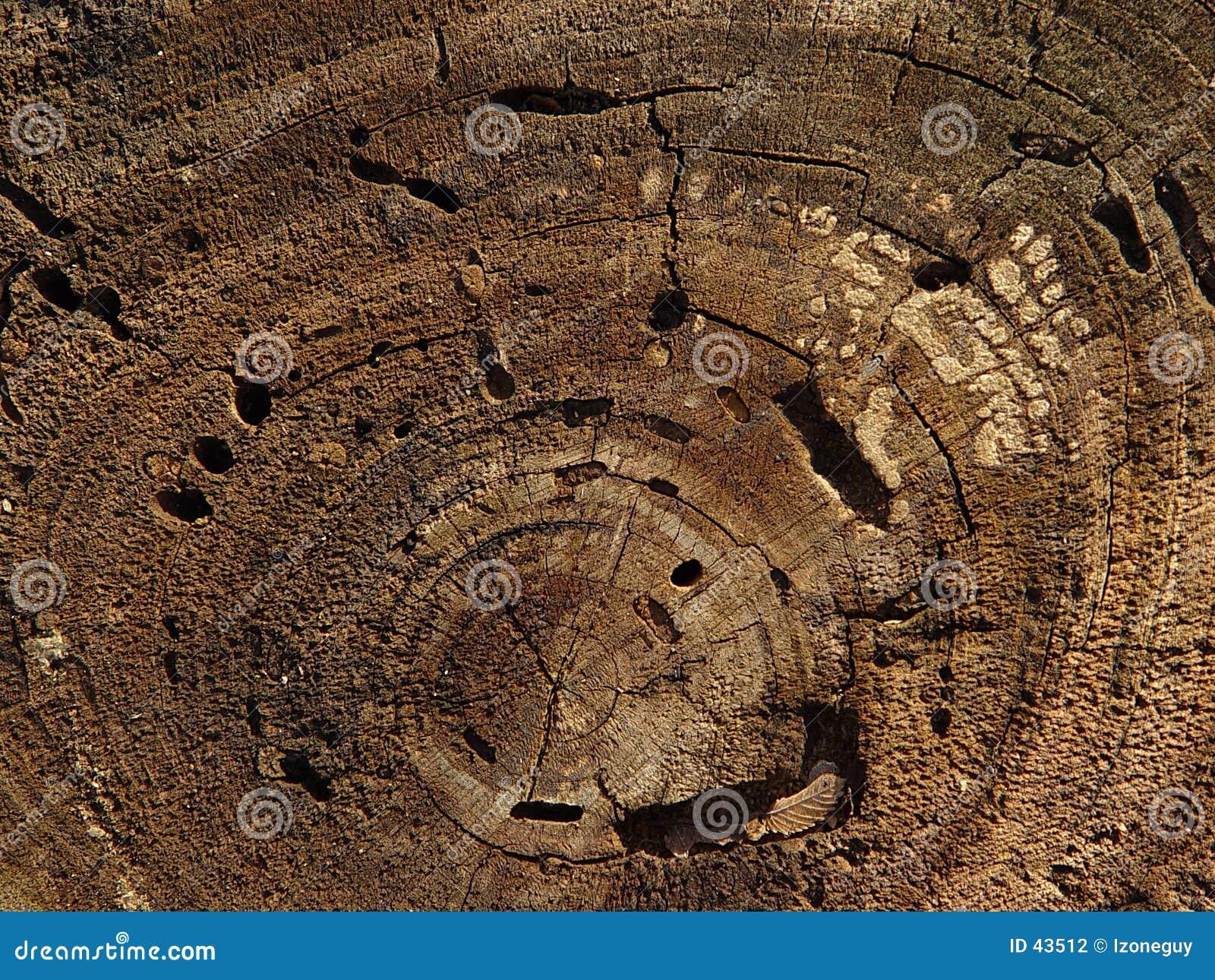 Baum-Ringe