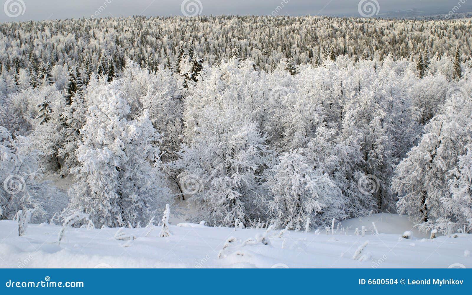 Baum `s Frost