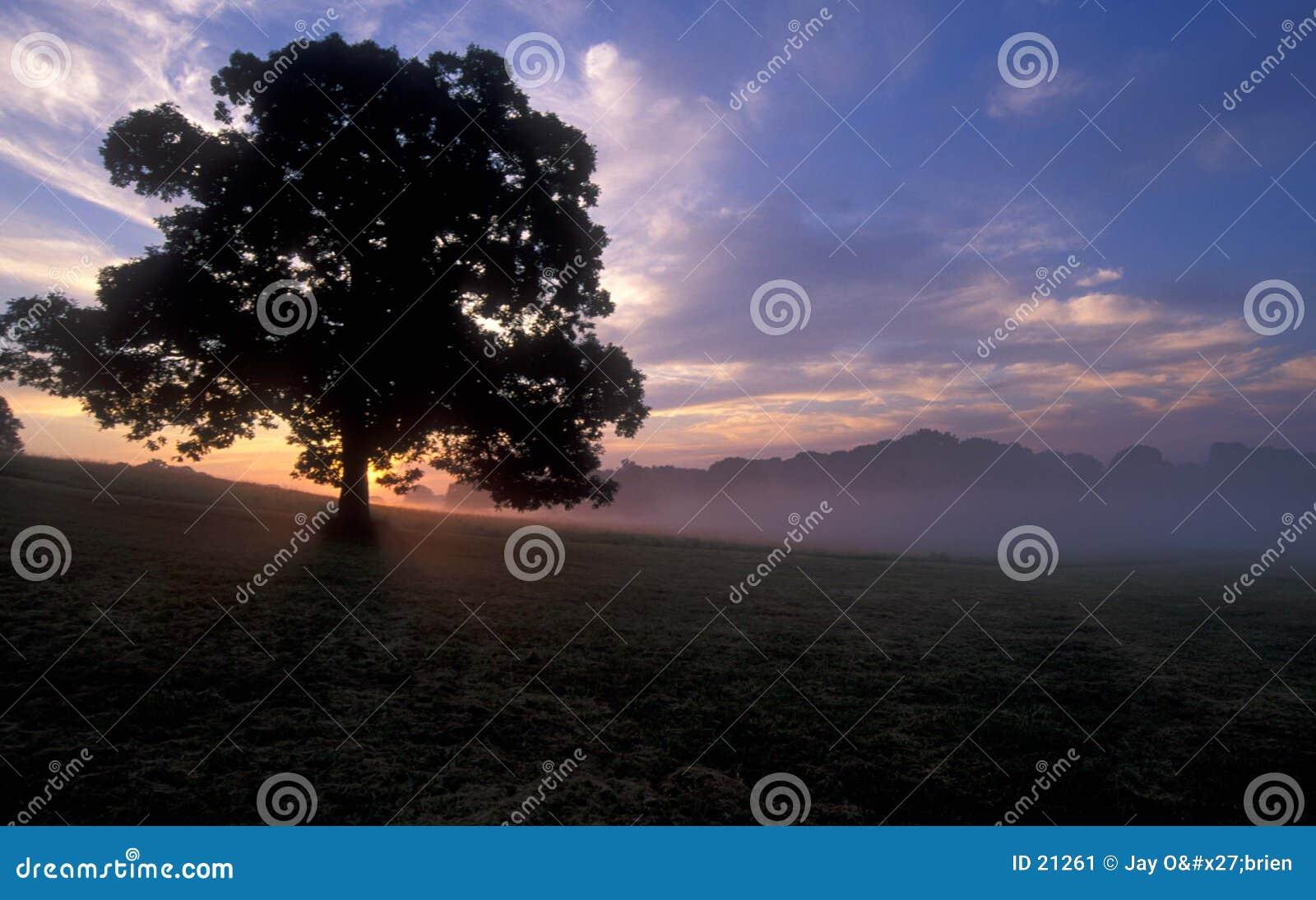 Baum am Sonnenaufgang
