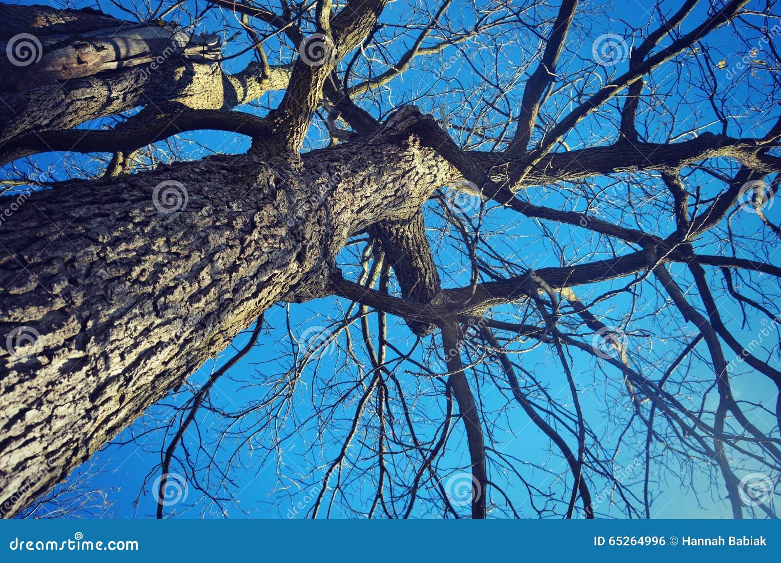 Baum-Stamm und Niederlassungen