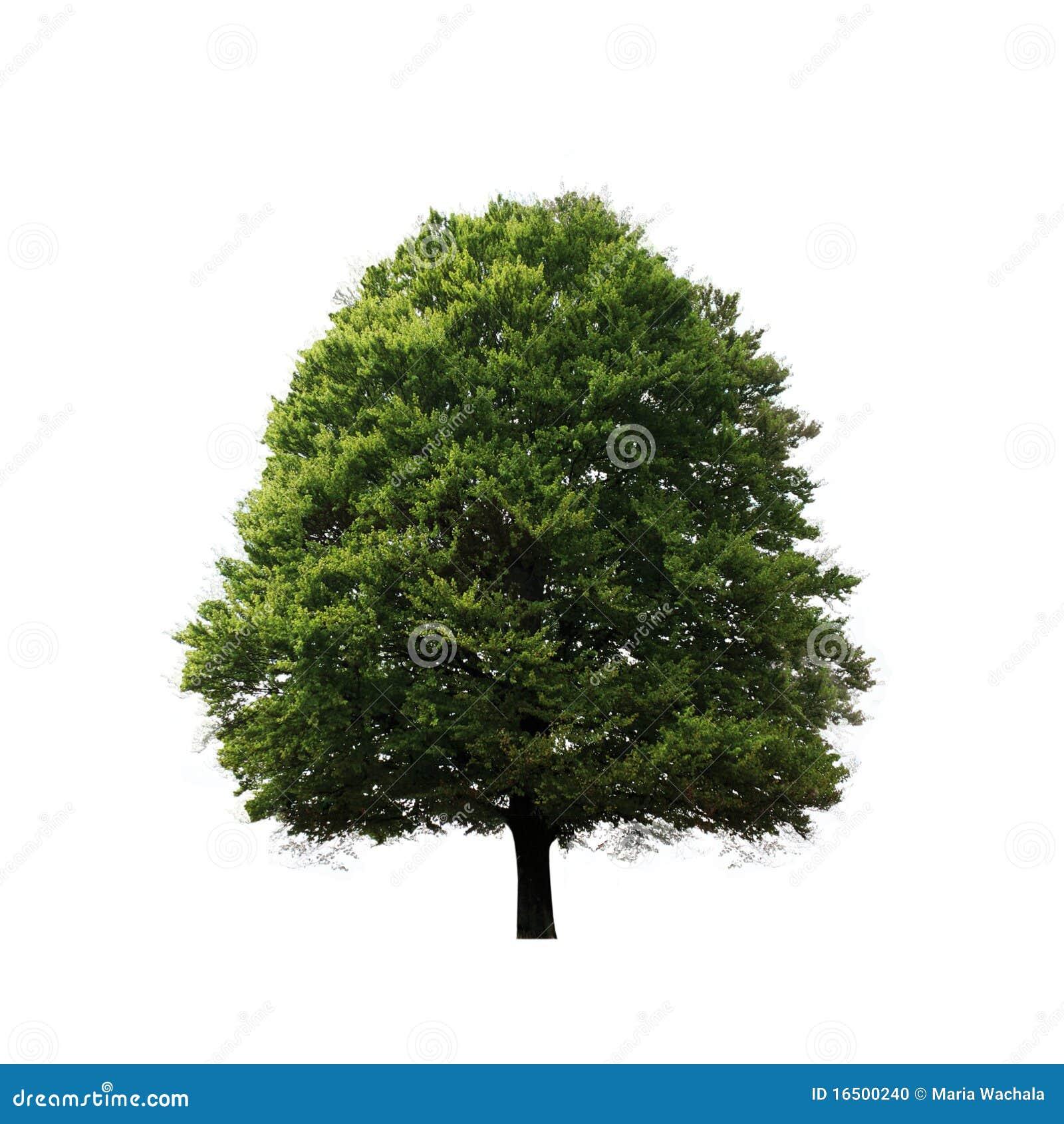 Baum trennte