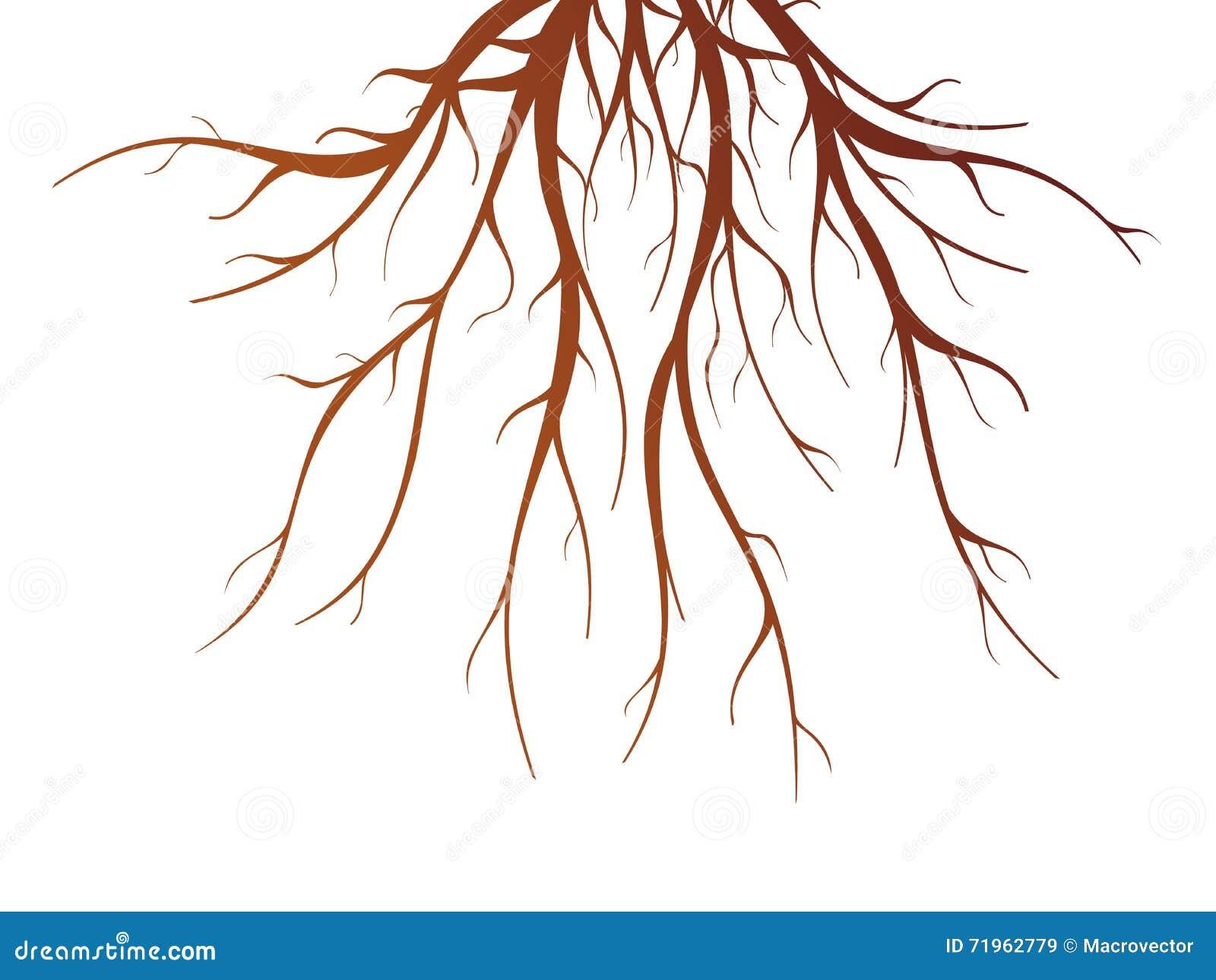 Baum-Wurzel-Illustration Vektor Abbildung - Bild: 71962779
